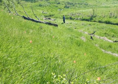 Riparian Restoration, Piper Creek Restoration Agriculture Project